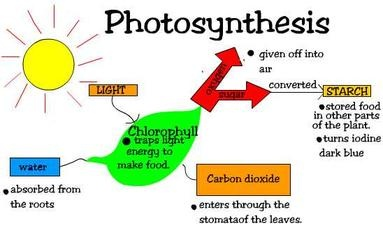 What are the products of photosynthesis